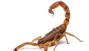 blog scorpion-sting-by-nature; Mark Villareal, Speaker