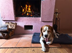 A Burnt Dog does not get too close to the Fire
